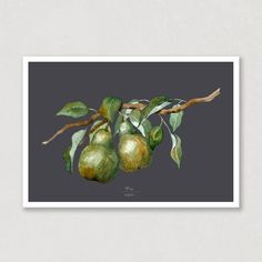 I love how this charcoal background really makes the green in this watercolour poster stand out. These pears on a branch reminds me so much of summer. Just like the whole collection, you can find this poster with 6 different backgroundcolours! Take a look, and see which one is your favorit 😍🍐 #poster #pears #pearbranch #watercolors #watercolours #backgroundcolours #art Watercolor Postcard, Watercolor Artwork, Watercolor Paper, Pears, Dusty Blue, Colorful Backgrounds, First Love, Charcoal, Watercolours
