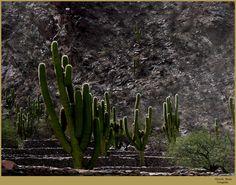 Cardones by MARCELO Harán, via Flickr