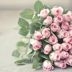 Bouquet of pink roses - download by Sylvia A Clarke
