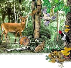 Forest Animal resources