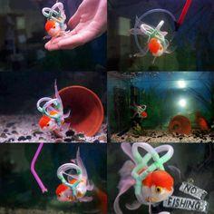 """O jovem Leighton Naylor resolveu ajudar seu peixe de estimação, o Einstein, que é deficiente, perdeu o uso das suas nadadeiras e por isso só conseguia nadar de cabeça para baixo. Para ajudar o Einstein, seu dono criou um colete salva-vidas usando tubos especiais, que permite que ele nade normalmente, adaptou o aquário para o...<br /><a class=""""more-link"""" href=""""https://catracalivre.com.br/geral/invencoes-ideias/indicacao/jovem-cria-colete-e-aquario-adaptado-para-peixe-deficiente/"""">Continue…"""
