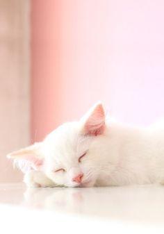 pink.quenalbertini: Kitty cat asleep | The Rose Garden