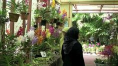 Prospek Bisnis Tanaman Hias Bunga Anggrek yang Menjanjikan