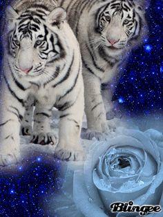 dunno tiger
