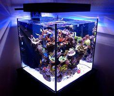 SolanaXL60 Panorama LED Lighting | A beautiful cube aquarium… | Flickr