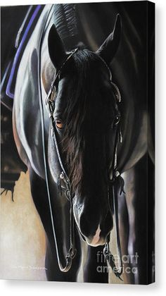 Majestic II by Amy Goodman Horse Print 19x25
