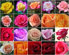 I love roses, what can I say? :-)