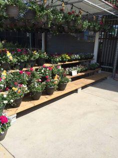 Home Depot garden centre merchandising