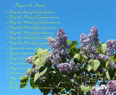 Prayer to St. Patrick Blue Sky and Lilacs by Barbara Griffin Lilacs, St Patrick, Prayers, Sky, Wall Art, Flowers, Blue, Heaven, Lilac Bushes