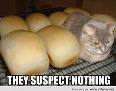 Loaf of bread...iz so warmz