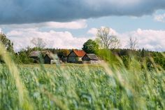 Wheat Fields, Wooden House, Sky And Clouds, Green Grass, Bushcraft, Sunny Days, Countryside, Russia, Scenery