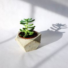 Such a cool concrete holder for your little plants!