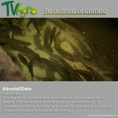 #AnotaElDato Sabías que... La trucha es el único pez cambia de coloración.