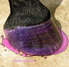 Colored hoof dressing that moisturizes and conditions your hooves while adding the perfect amount of glam! My Horse, Horses, Pony Express, Glitter Dress, Stuff To Do, Dressing, Pink, Therapy, Nails