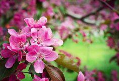 Bloemen fotograferen doe je zo