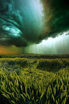 Against the Wind Print by Phil Koch
