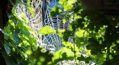 Green Master Project: Crear Estructurar y Promocionar un Negocio (II)