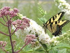 butterfly garden. Want!