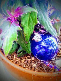 Purple velvet passion bloom