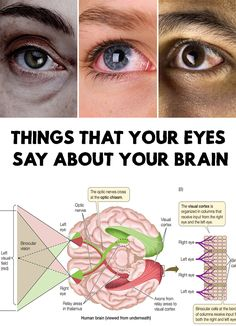 Amazing! The eyes are the windows of the soul ... or brain. Find out Things That Your Eyes Say About Your Brain!