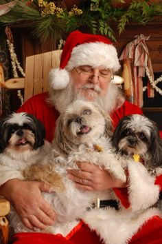 Merry Christmas Shih Tzu Puppy Holiday Dogs Santa Claus Dog Puppies #ShihTzu