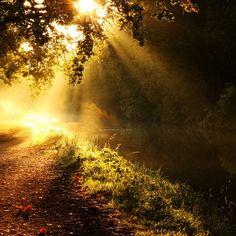 2048x2048 Wallpaper luz, sol, raios, fulgor, rio, ramos, árvore, manhã