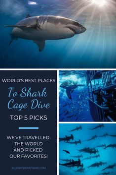 Cage Diving With Sharks, Shark Diving, Best Scuba Diving, Beautiful Landscape Wallpaper, Beautiful Landscapes, Travel Around The World, Around The Worlds, Shark Cage, Close Encounters