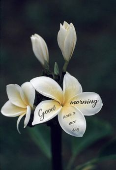 Morning Wishes Quotes, Good Morning Friends Quotes, Good Morning Image Quotes, Good Morning Beautiful Quotes, Good Morning Funny, Good Morning Picture, Good Morning Flowers, Morning Pictures, Good Morning Sunday Wallpaper