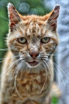 Old Cats, Professional Photographer, Netherlands, Photography, Animals, The Nederlands, The Netherlands, Photograph, Animales