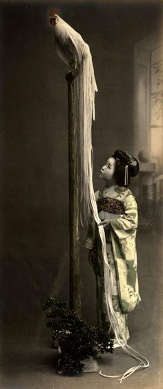 young girl with long-tailed fowl, Japan, 1908