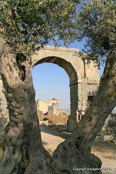 Dougga Arc De Severe Alexandre - Tunisie