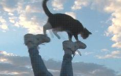 Hold my catnip ive got to walk on my tredmill