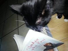 """A show-off cat who is reading my first cat book in a """"no paws"""" style, using only its tongue to turn the pages."""