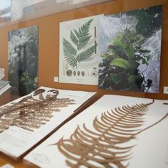 Using cutting edge genetic analysis, he's now working with Steere Herbarium specialists to look beyond the microscope and into the very DNA of the specimens we keep, turning long-shelved specimens (some centuries old) into treasure troves of evolutionary information.