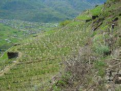 Vigneto Ultimi Raggi, Sassella, 600 m s.l.m.