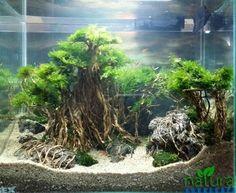 Acuario Plantado. Aquarium AquascapeReef AquariumPlanted ...