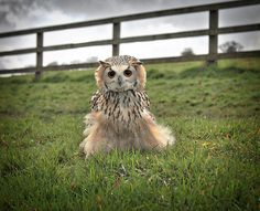 Mr Owl by Finbarr Murray on 500px