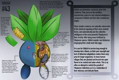 A Pokémon Anatomy Series For The Ages - Neatorama