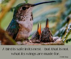 Use your wings – Chrysalis Wellness, LLC Wings, Inspirational Quotes, Wellness, Stock Photos, Bird, Canvas, Animals, Life Coach Quotes, Tela
