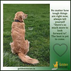 A little Monday motivation from Hudson #2645. #goldenretriever #rescuedog #adoptdontshop #motivationalmonday