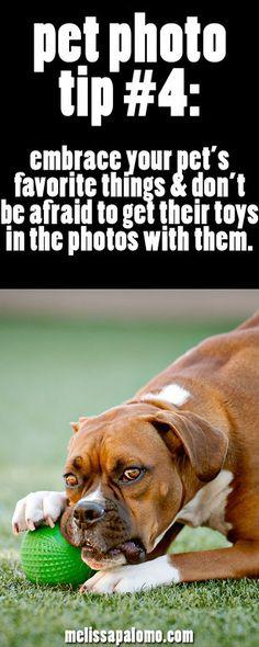 Melissa Palomo: A Pet and People Photographer in Southern California | Temecula Pet Photographer | Orange County Pet Photographer | Riverside Pet Photographer | Redlands Pet Photographer - Part 2
