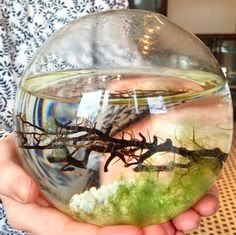 A world in a sphere #ecosphere #MJMCobbleHill