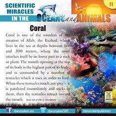 Coral Coral is one of the wonders of the creation of Allah, the Exalted, which lives in the sea at depths between five and 300 meters, where the coral attaches itself by its lower part to a rock or plant. #ScientificMiraclesInTheOceans #ScientificMiraclesInTheOceansAndAnimals  #DarussalamPublishers #IslamicEBooks #AmazonKindle  #KindleStore #BarnesAndNoble