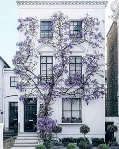 Maybe you don't need to add shutters and have 3 colors for your exterior - MAYBE you just need a GORGEOUS wall-climbing flower like WISTERIA! House front inspiration, major curb appeal ideas, how to make your house POP from the rest. Design Exterior, Interior And Exterior, Ranch Exterior, Exterior Stairs, Grey Exterior, Cottage Exterior, Architecture Design, Spring Architecture, Building Architecture