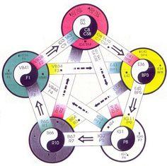 5 elementos - 5 movimientos http://www.jingchishen.org/