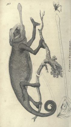 2 - Zoological lectures delivered at the Royal Institution - Biodiversity Heritage Library