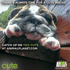 Need a break? Watch some of my favorite Too Cute episodes here. #animalplanet #toocute