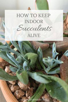 How To Keep Indoor Succulents Alive