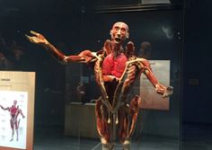 Tech Museum embraces augmented reality with Body Worlds Decoded exhibit  ||  Museums around the world need to use technology to hold the attention of increasingly tech-savvy children. And that's doubly true for the Tech Museum of Innovation in San Jose, California. Th… https://venturebeat.com/2017/10/15/tech-museum-embraces-augmented-reality-with-body-worlds-decoded-exhibit/?utm_campaign=crowdfire&utm_content=crowdfire&utm_medium=social&utm_source=pinterest