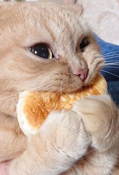 Everyone loves animals and pets, and cats are the funniest animals! They make us laugh and happy! Just look how all these cats & kittens play, fail, get Cute Funny Animals, Cute Baby Animals, Funny Cats, Cats Humor, Humorous Cats, Wild Animals, Cute Cats And Kittens, Kittens Cutest, Kittens Meowing